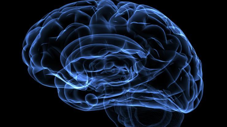 Fluorescent blue lines define a human brain.