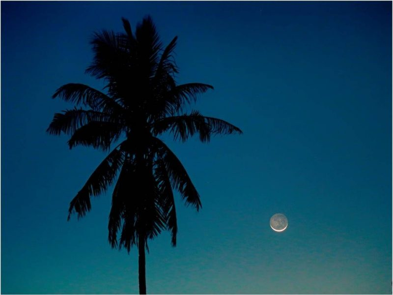 Palm tree, and slim crescent moon next to it. The darkened part of the moon is glowing dimly with Earthshine.