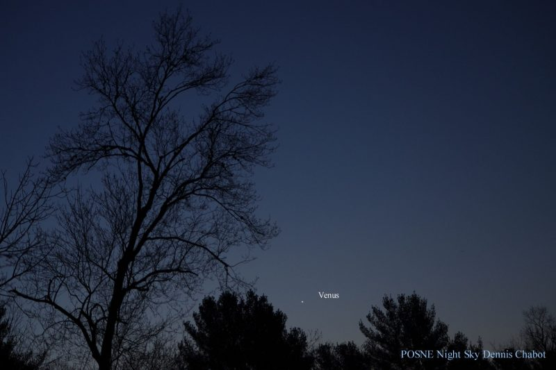 A tree-lined horizon in twilight, with Venus just above the treetops.