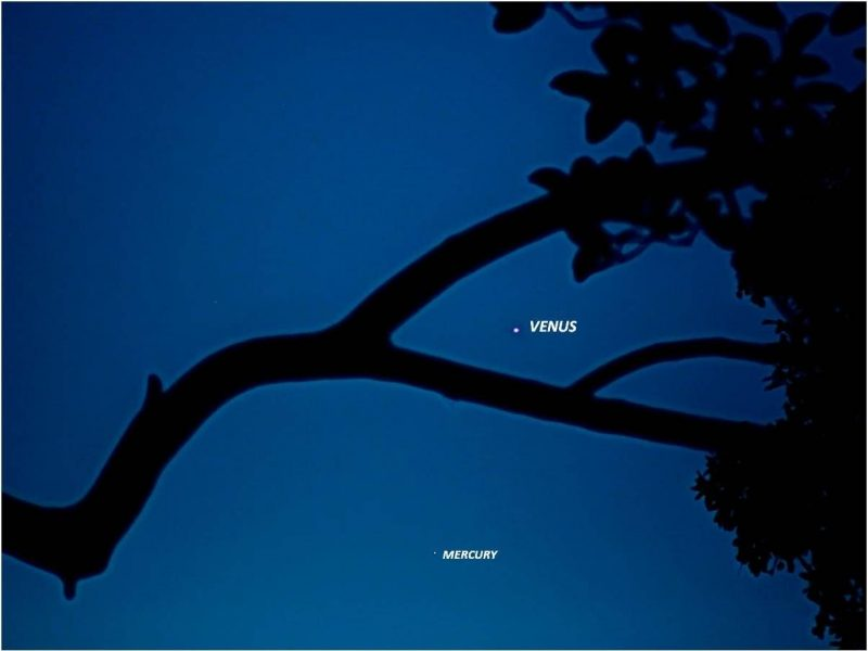 A few thick branches with dots labeled Venus and Mercury on deep blue sky.
