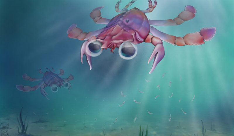 Weird many-legged sea creature with big eyes swimming undersea.