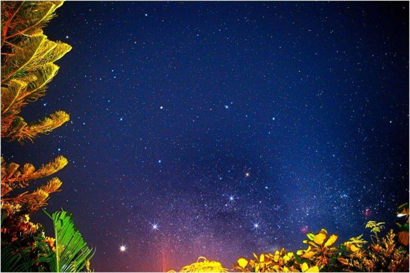 Stars of Southern Cross plus Alpha and Beta Centauri above brightly lit vegetation.