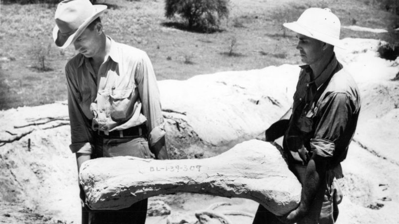 2 men in hats and rolled sleeves carrying a giant bone.