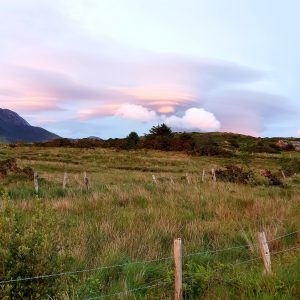 Pink and blue clouds above a field of yellow-green grass.