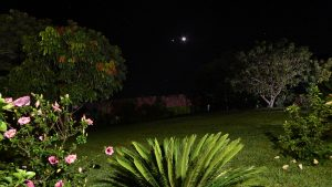 Dots of planets and a crescent moon, behind a brightly lit garden.