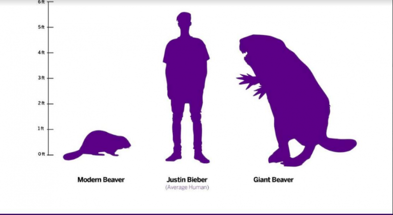 Purple silhouettes of a modern beaver, a standing man, and a giant beaver.