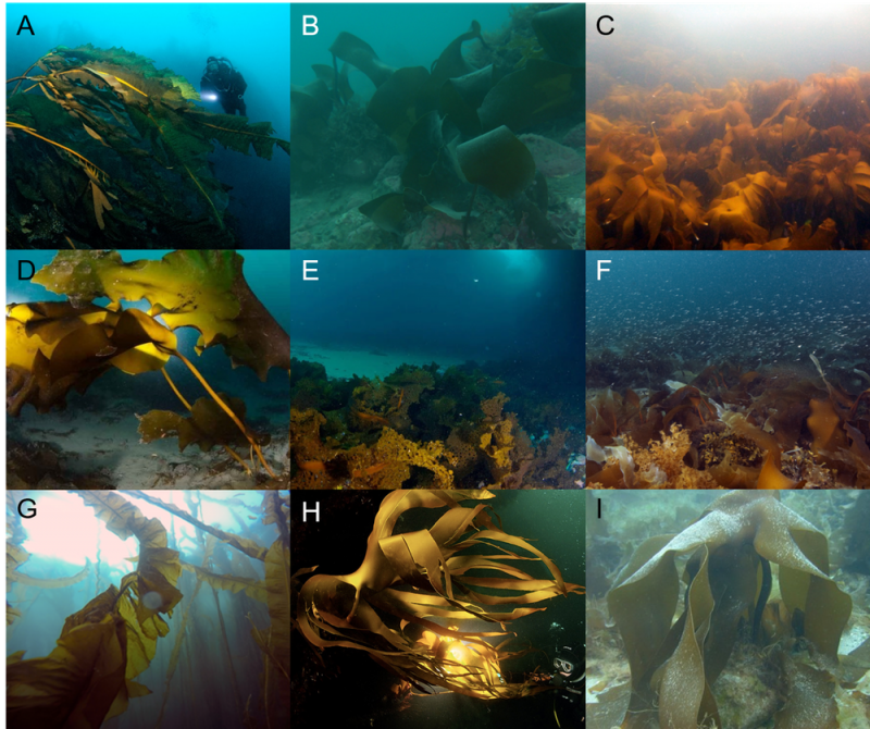 Nine views of different shapes of leaves, mostly long, in murky blue-green water.