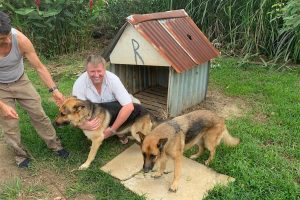 Doghouse and two dogs.