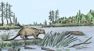 Drawing of big beaver at the edge of the water, and another beaver swimming.