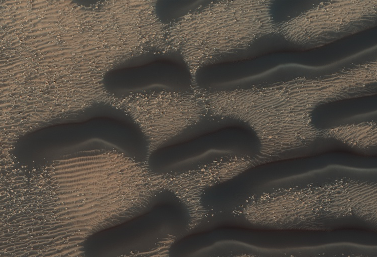 Tan linear sand dunes with dark oblong features interspersed.