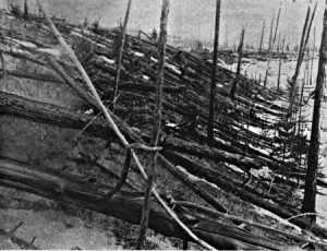Fallen and standing trees in woods, in black and white.