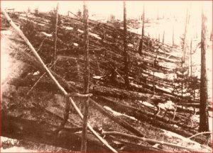 Fallen and standing trees in woods.