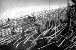 Matchstick-like trees laying on the ground, in black and white.