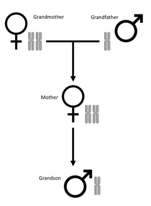 Family diagram showing number of genomes of 3 generations of ants.