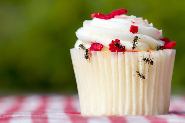 Ants crawling on a cupcake with swirly white icing and red sugar dots.