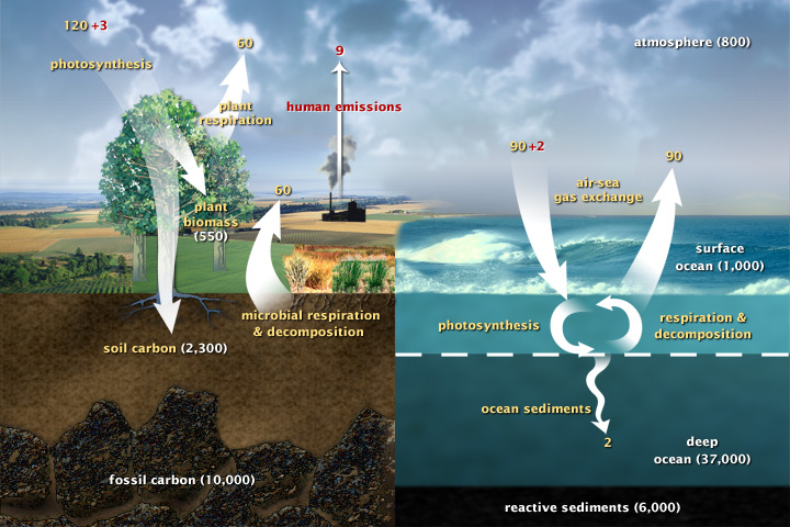 Cutaway view of land and sea with arrows indicating carbon production and fixing.