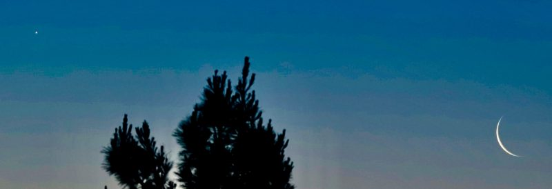 Waning moon and bright Venus in a blue sky, over the treetops.