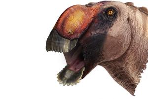 Duck-billed dinosaur.