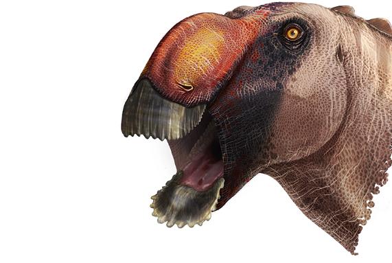 A new species of duck-billed dinosaur