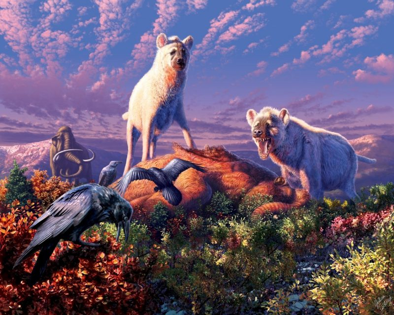 Two white hyenas standing on a dead mammoth, one barking at some carrion crows.