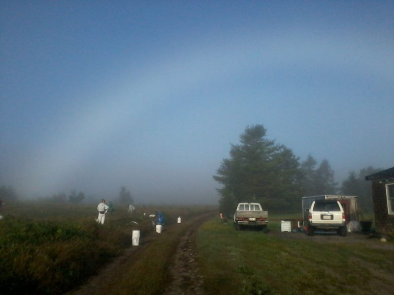 Diffuse white arc above bucolic scene of farmworkers in brushy field near dirt road.
