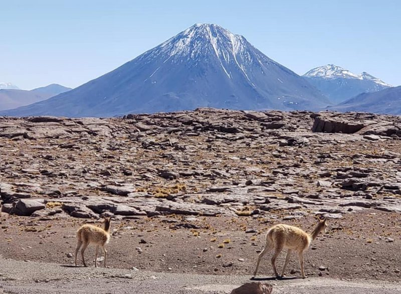 Gray-brown rocky landscape, conical blue snow-capped mountain, two long-haired deer-like animals.