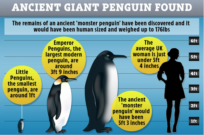 Three penguins ranging from 1 foot to 5 feet next to silhouette of woman.