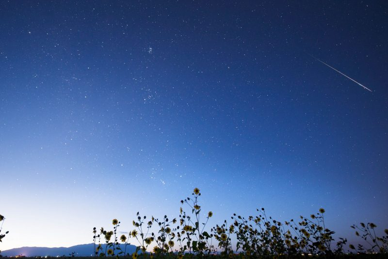 Bright meteor in upper right corner of photo, above sunflowers, with mountains in the distance.