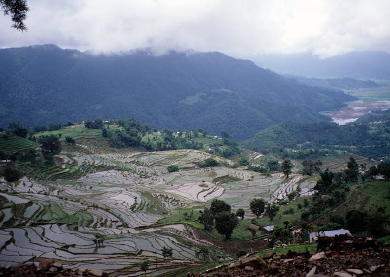 Steep hillsides with miles of water-filled terraces, among forested mountains.