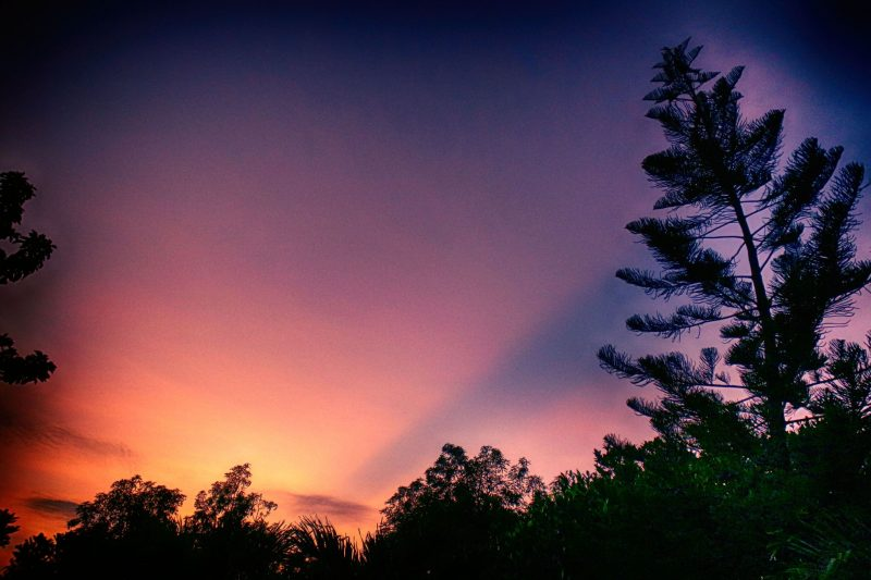 Pink sunrise sky over treetops, with a single dark crepuscular ray heading up from the horizon.