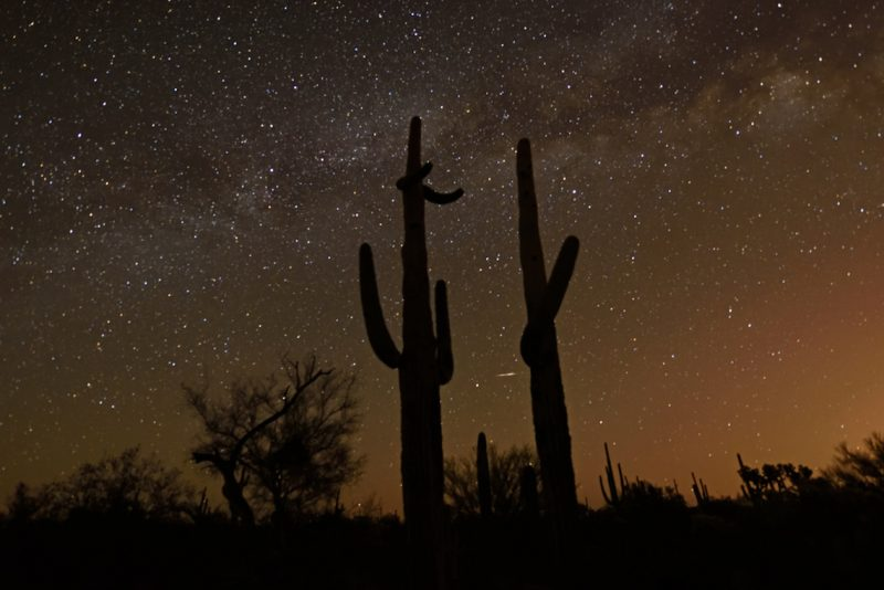 Tall saguaro cactuses silhouetted against star field with Milky Way running left to right.