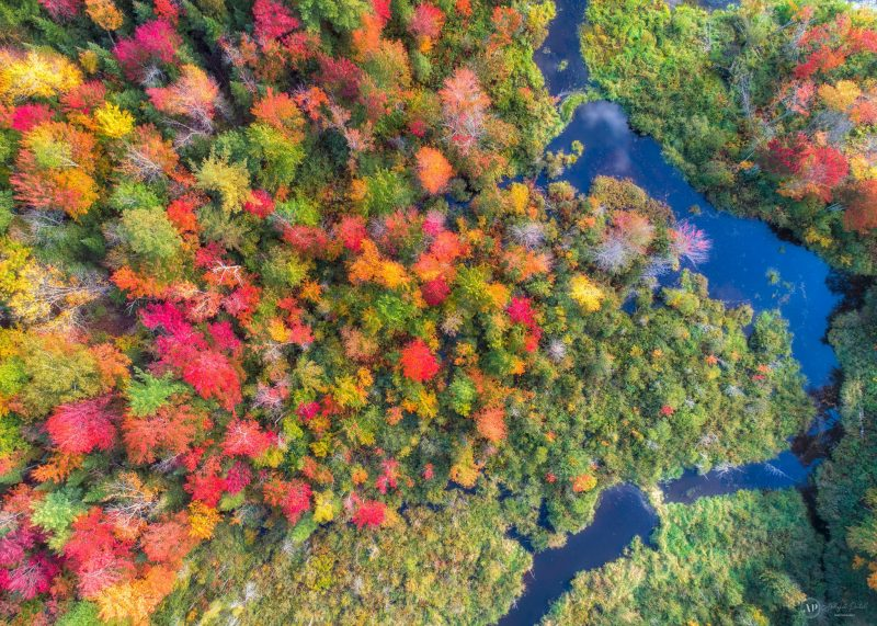 Aerial view of wooded area with green, yellow, orange, and red trees along bright blue river.