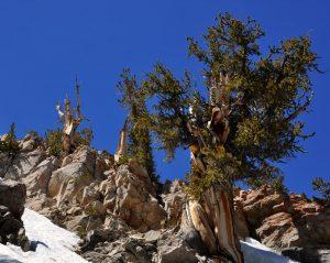 Craggy tree growing amid rocks.
