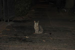 Photo of a cat with glowing eyes.