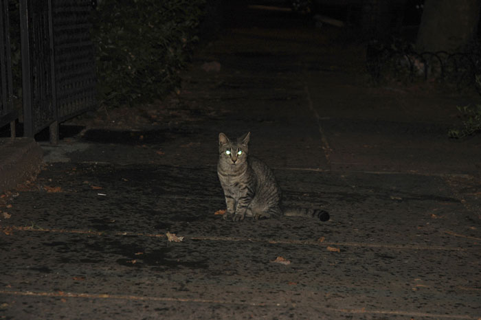 Dark location with sitting striped cat with bright pale green glowing eyes.