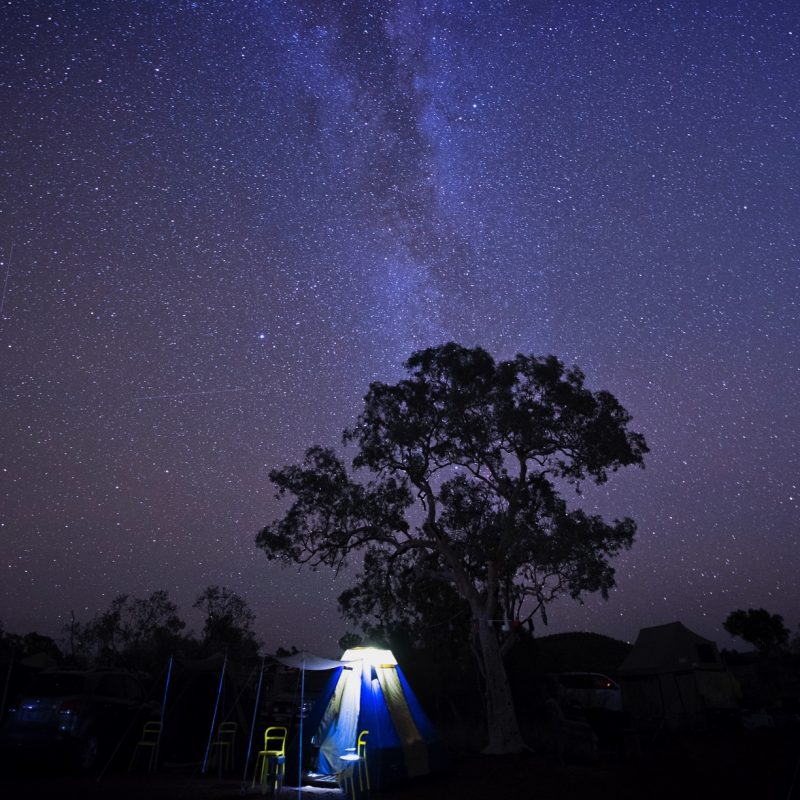 Large dark tree against starfield with lit-up tent at its base.