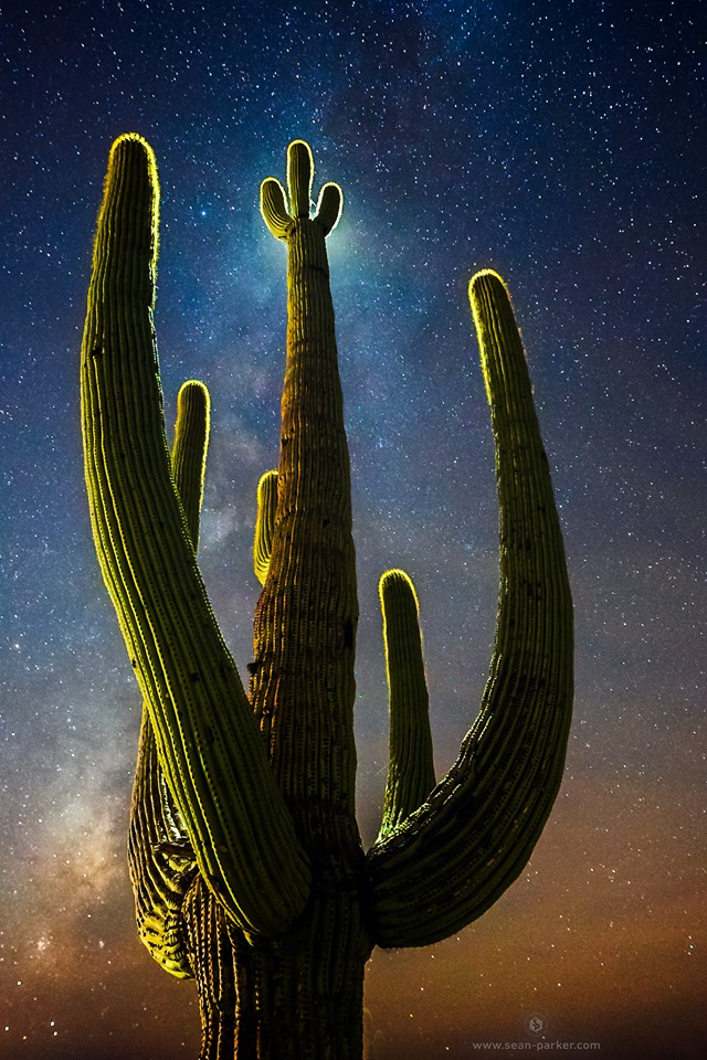 Looking up at a tall, backlit green cactus against a starry sky.
