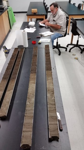 Long table with long transverse-striped samples laid out, scientist seated at far end.