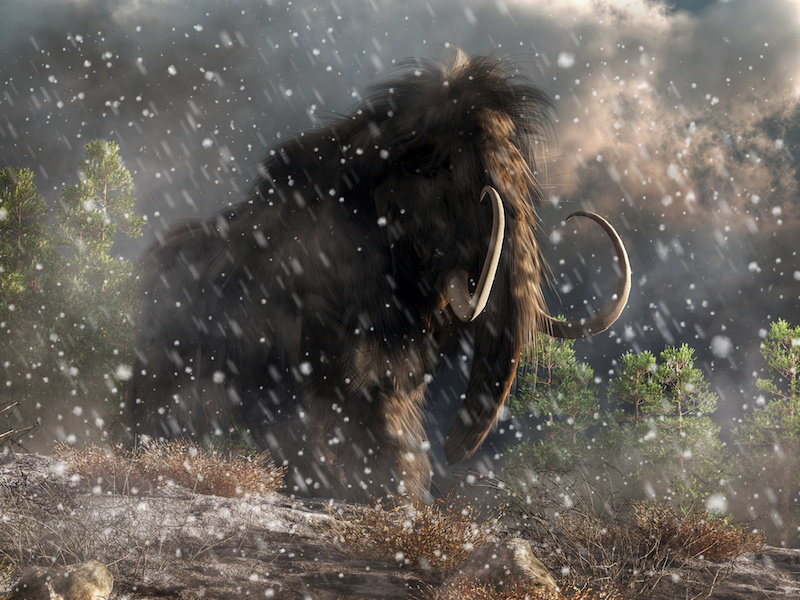 Large hairy elephant-like creature with long curved tusks in a snowstorm.