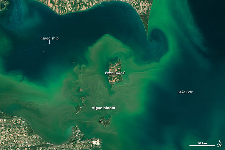 Satellite view of large, bright green areas of water around irregular shoreline.