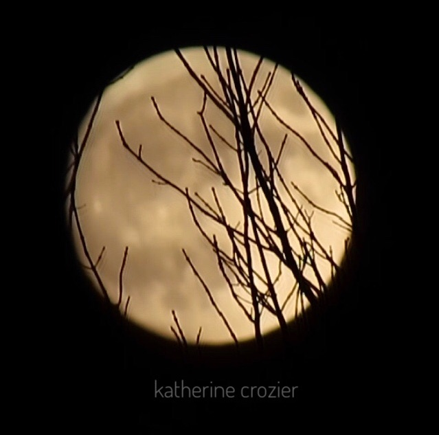 Nearly full moon behind bare trees