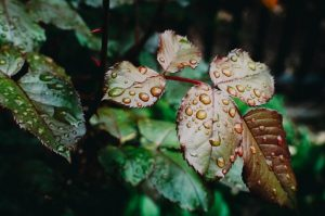 Plant leaves with raindrops.