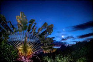 Venus and Jupiter - very bright - next to a palm.