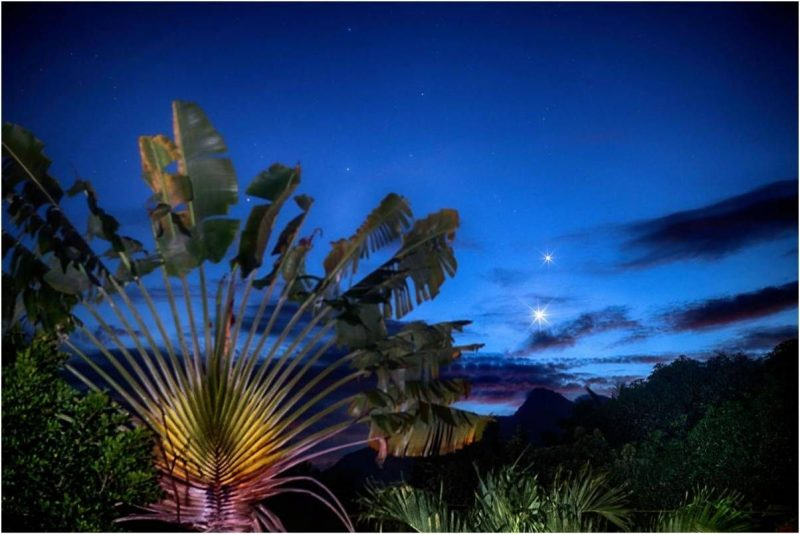 Venus and Jupiter - very bright - next to a wheel-like palm frond.