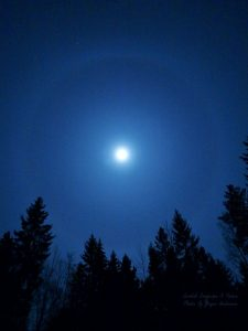 Bright moon surrounded by a halo, above treetops.