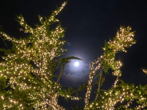 Full moon seen through tree branches covered with holiday lights.