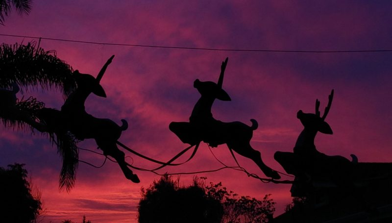 Silhouettes of reindeer against a pink sky.