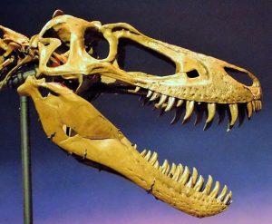 Dinosaur skull with sharp teeth.