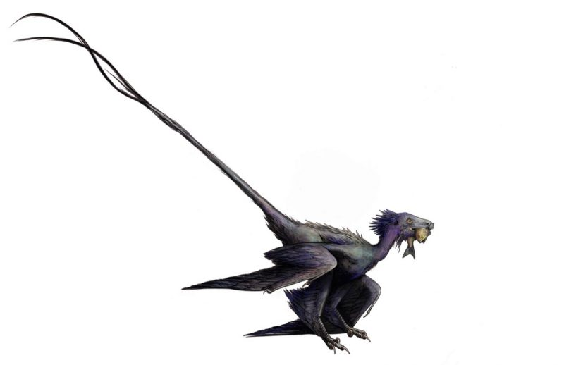 Two-legged dragon-like creature with with feathered wings and a long tail.