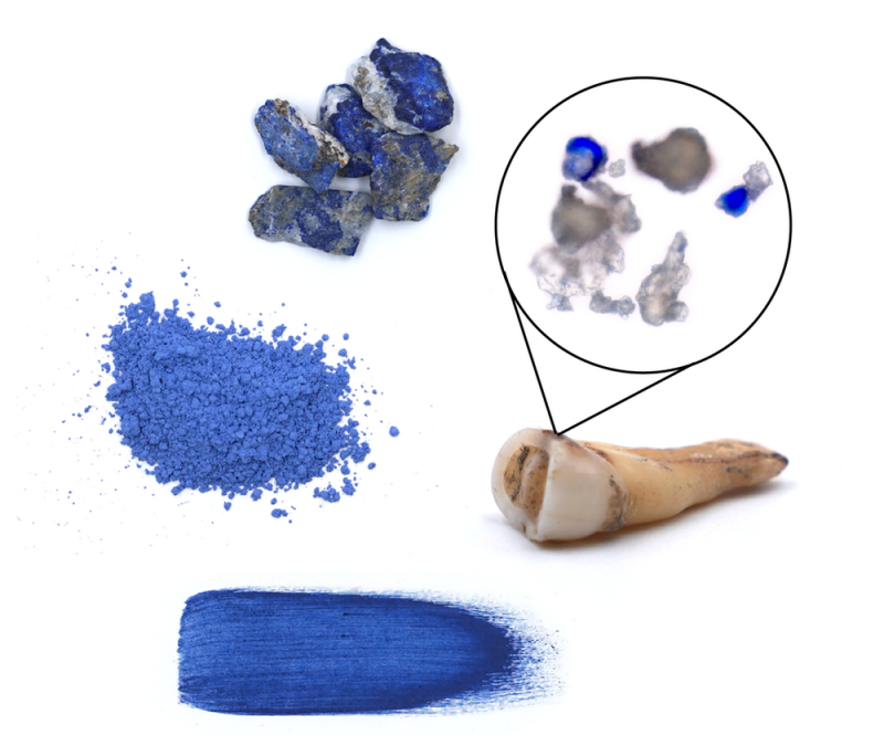 Tooth and examples of powdered blue lazurite rock.